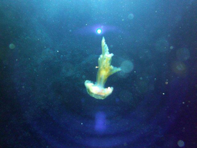 Diving in Birkirkara, Malta - By Pirate Bear