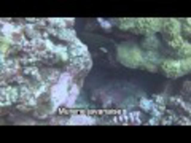 TOP DIVE-Tahiti InterContinental - Dive Center in French Polynesia