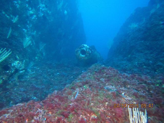 Narval Plongee - Dive Center in France